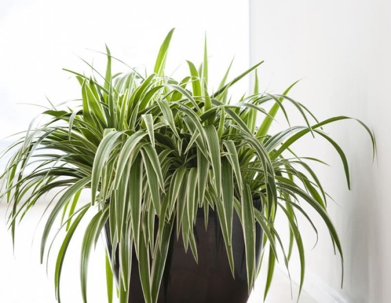 Тропические ядовитые растения фото и названия поговорили натальей